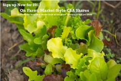 sign-up-lettuce-banner